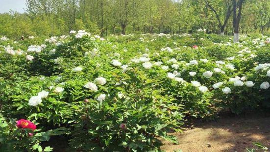 Qinhuang Botanical Garden