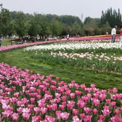 Beijing International Flower Port User Photo