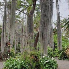 Ilam Gardens User Photo