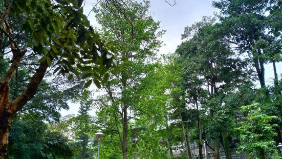 Dafeng Park