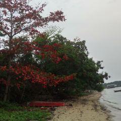 Trikora Beach User Photo