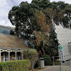 Pukeiti Rhododendron Park User Photo