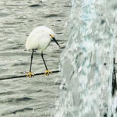 Lake Eola Park User Photo