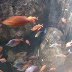 Old Town Aquarium User Photo