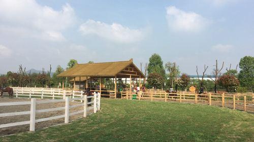 Garden Jialebi Paradise