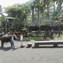 Bali Elephant Park User Photo