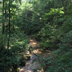 Hemu Forest Park User Photo