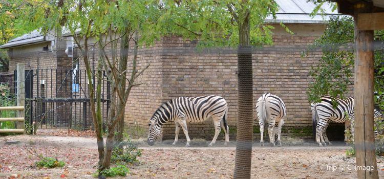 倫敦動物園2