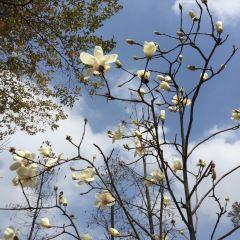 Dongguan Botanical Garden User Photo