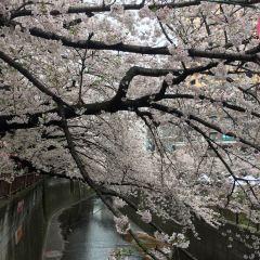 메구로가와 강 여행 사진