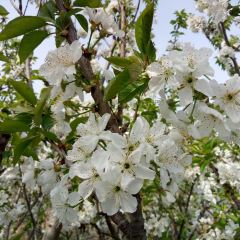 Dongying Halophyte Botanical Garden User Photo