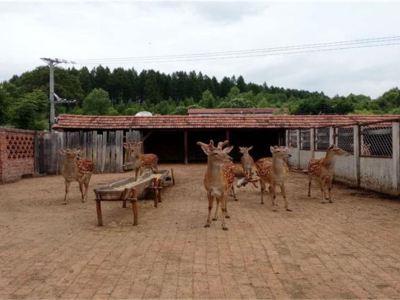 백두산 특산 생태박물관