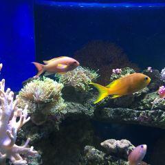 廣州海洋館用戶圖片