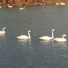 Swan Lake User Photo