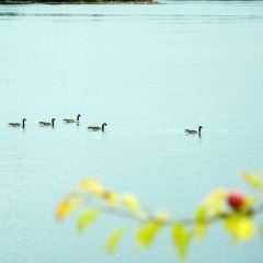 加拿大千島湖用戶圖片