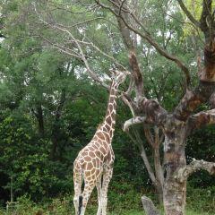 덴노지 동물원 여행 사진
