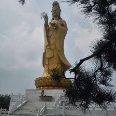Linqu Black Pine Forest User Photo