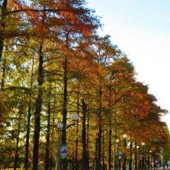 나카노시마 여행 사진