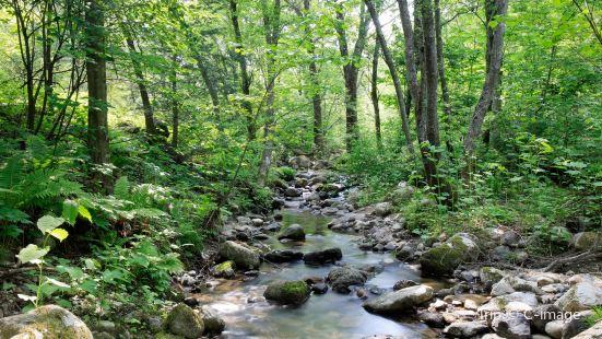 Noboribetsu Primeval Forest