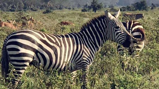 基蘇木黑斑羚禁獵區