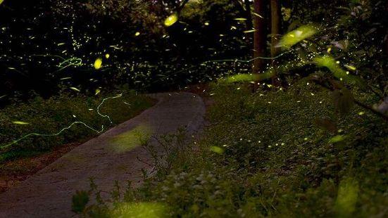 南湖螢火蟲花園