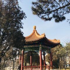 싱하이 공원 여행 사진