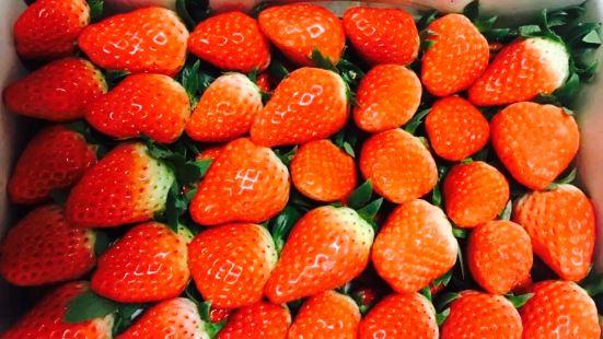 金福草莓園採摘