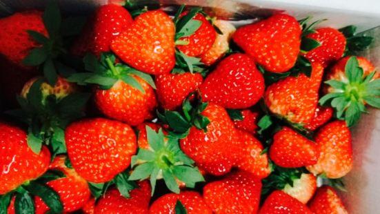 琪琪草莓園