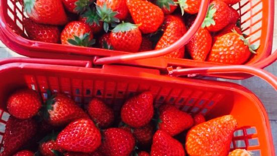 鎖石生態園三胡草莓園