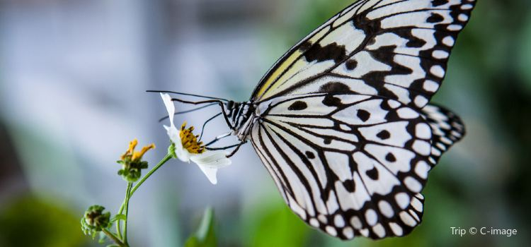 Butterfly Park & Insect Kingdom2
