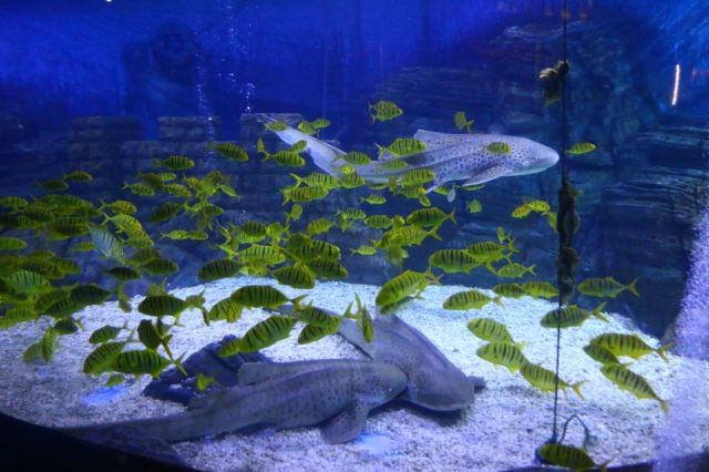 옌타이 하이창 고래&상어 해양공원