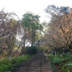 후난 식물원 여행 사진