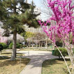 紫荊山公園用戶圖片