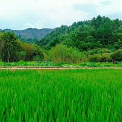 Mount Youran Alpine Wetlands Scenic Area, Qinling Mountains, Shaanxi Province User Photo