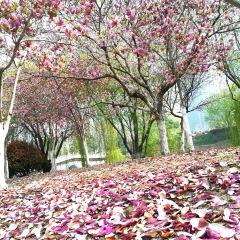 西雙湖風景區用戶圖片
