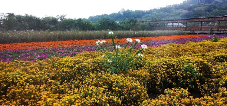Dan Ying Agricultural Ecological Park2