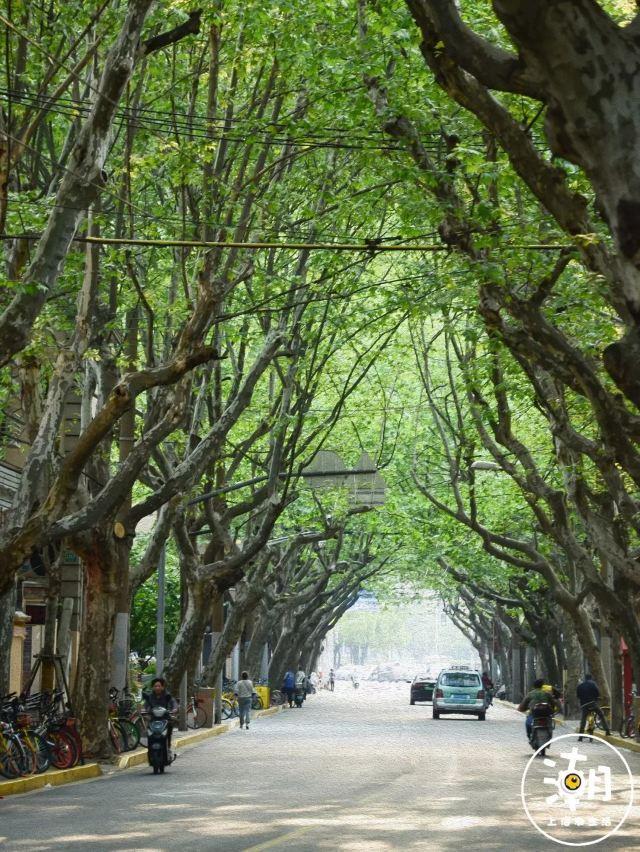 在魔都,有一種百年滄桑叫愚園路!