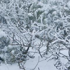 大雪山國立公園用戶圖片