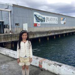 Platypus House User Photo