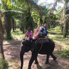 Nosey Parker's  Elephant Camp - Elephant rides in the forest User Photo