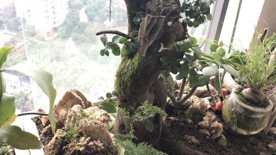 香花坊盆景點