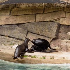 舊金山動物園用戶圖片