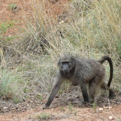 Pilanesberg National Park User Photo