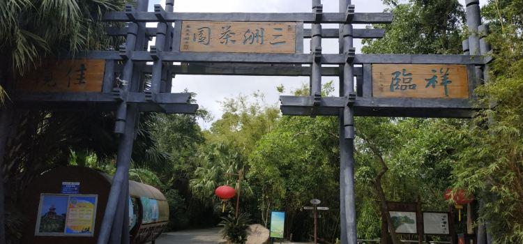 Sanzhou Tea Garden2