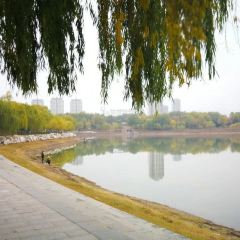 Citizen's Park User Photo