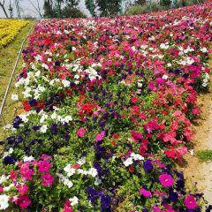 Macchiato Flower Sea User Photo