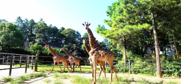 창사 생태 동물원2