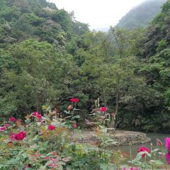 Lingxi River Forest Tourist Resort User Photo