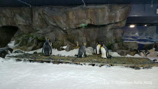 凱莉塔爾敦海洋生物水族館