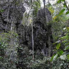 Nongyouyuanshi Forest User Photo